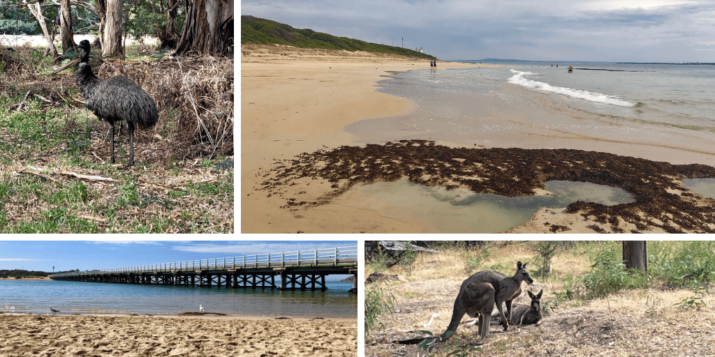 Collage of emu, kangaroo, and beaches Kathleen Morris